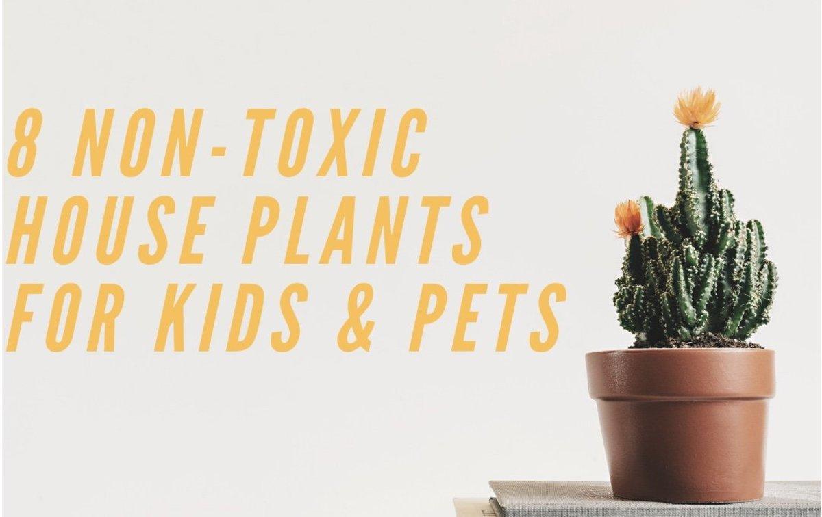 Non Poisonous House Plants