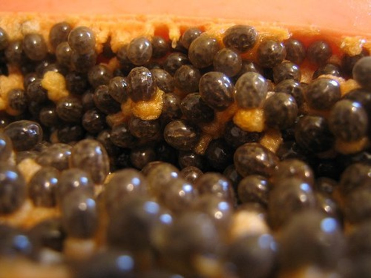 Papaya seeds are not only flavourful, they have anti-parasitic properties.