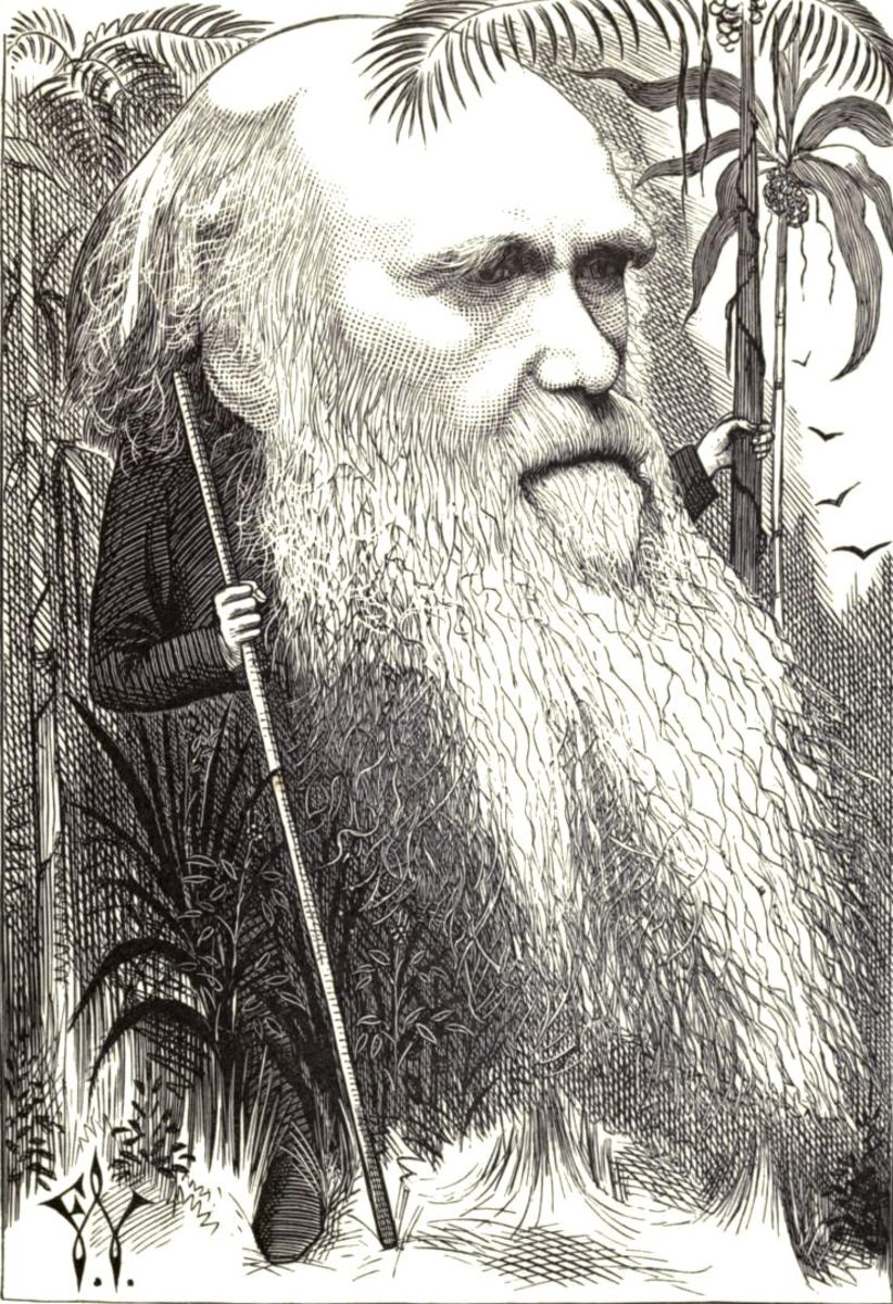 Charles Darwin Theory Of Evolution By Natural Selection