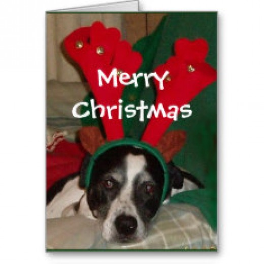 Christmas Cards For Cat Lovers HubPages