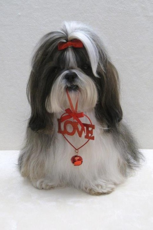 Valentines Day Musings From Cards To Dogs To Handguns And