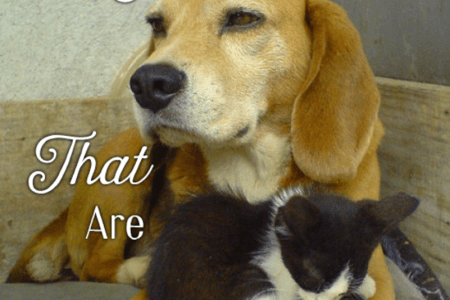Five Dog Breeds That Like and Are Good With Cats   PetHelpful The beagle is one of the top five dog breeds that are good with cats
