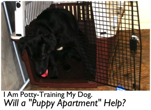 Are Puppy Apartments The New Solution To Potty Training