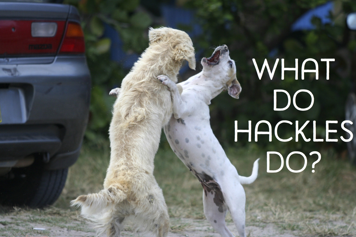 Example Dog Fighting