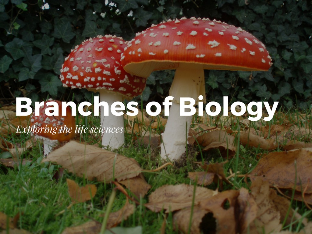 The Branches Of Biology Amp What They Study