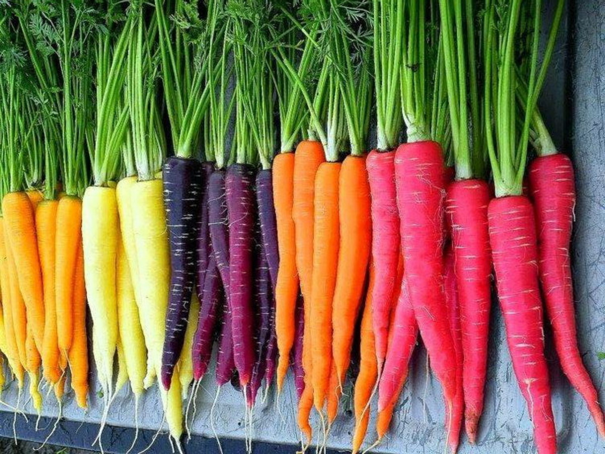 Why Carrots Are Different Colors Amp Fun Facts