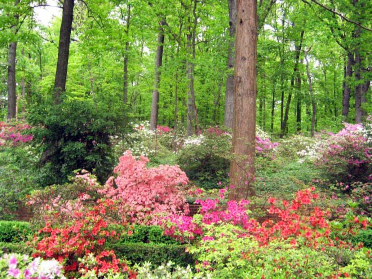 Shade Loving Flowering Plants For A Woodland Garden Dengarden Home And Garden