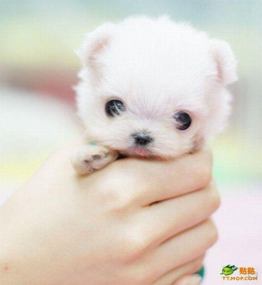 Dogs That Stay Small Hubpages
