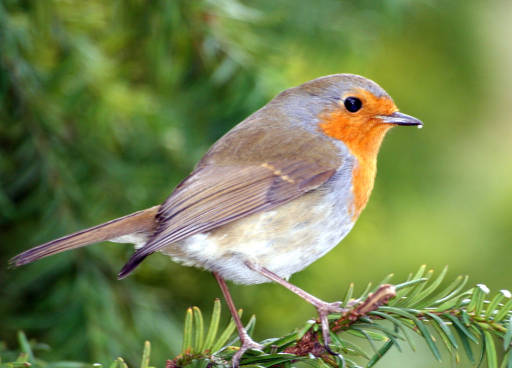 Ideas to Create a Backyard Bird Sanctuary: Attracting Wild ... on Birds Backyard Landscapes  id=72906