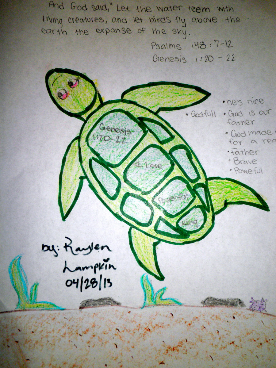 Kids Sunday School Bible Art Lesson Sea Turtle Animal