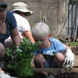 Homeschoolers Can Plan Their Own Garden Unit Study