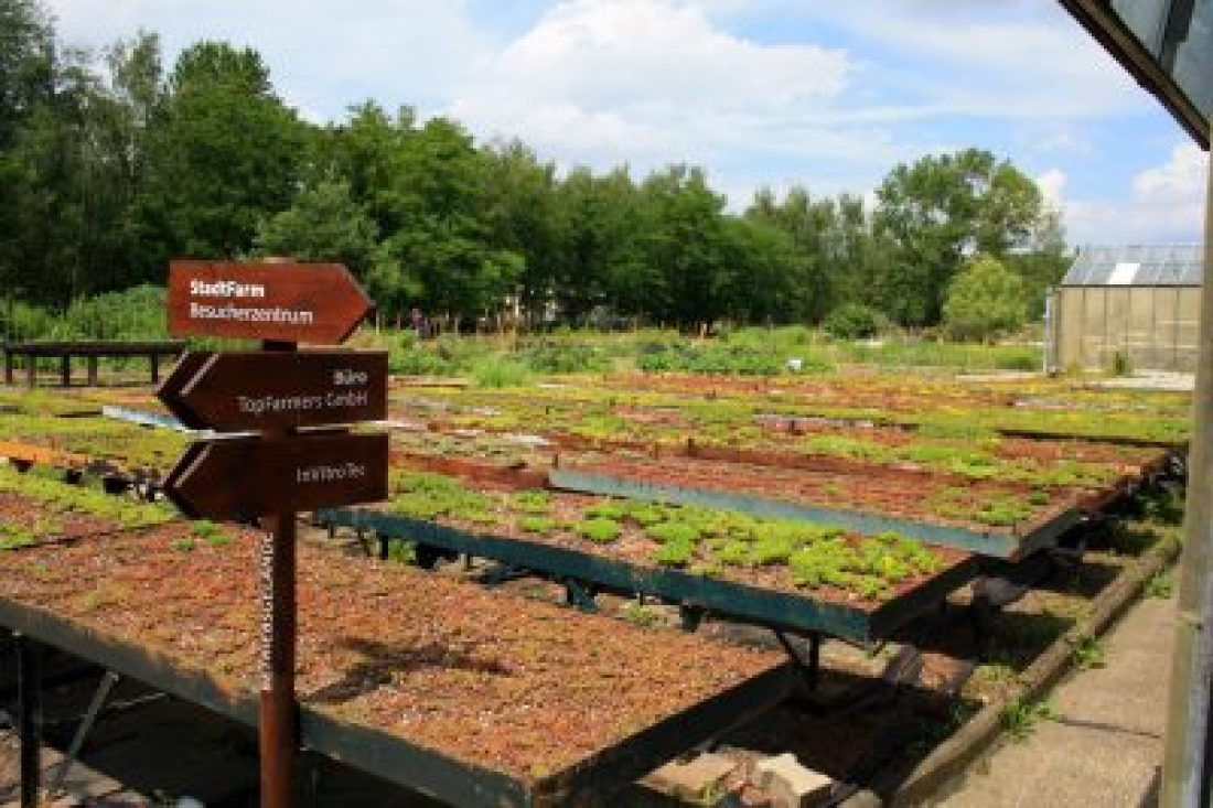 Urban Farming auf der Stadtfarm Berlin