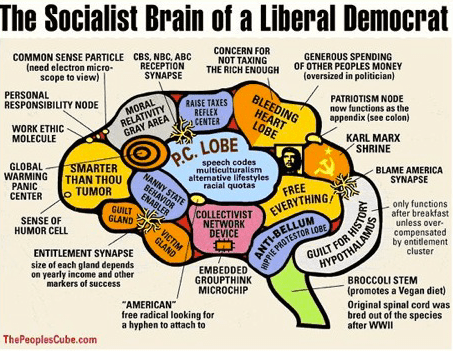 Cartoon of the Liberal Brain