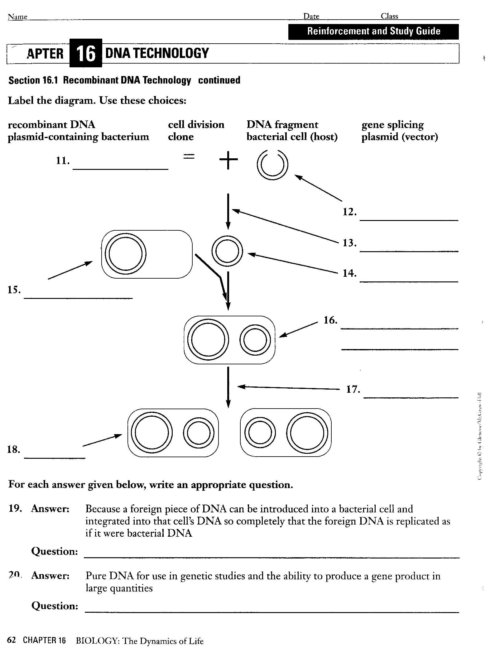 Dna Modeling Worksheet