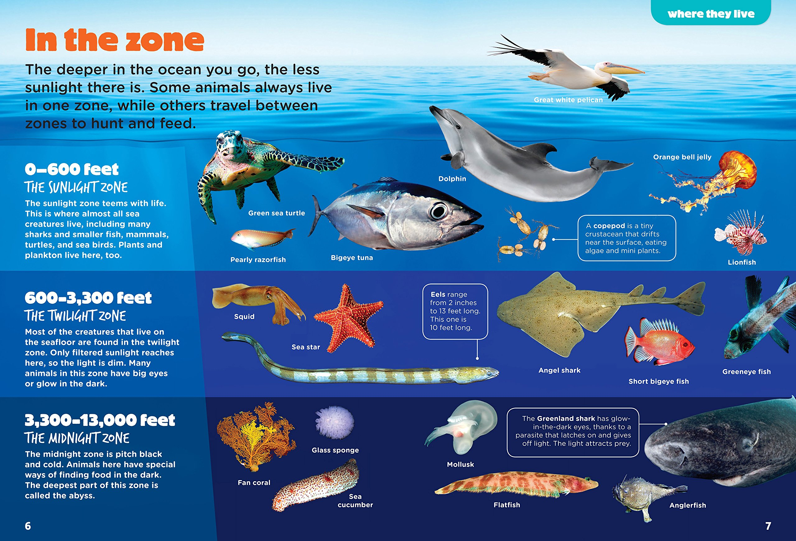 Marine Life Zones Worksheet
