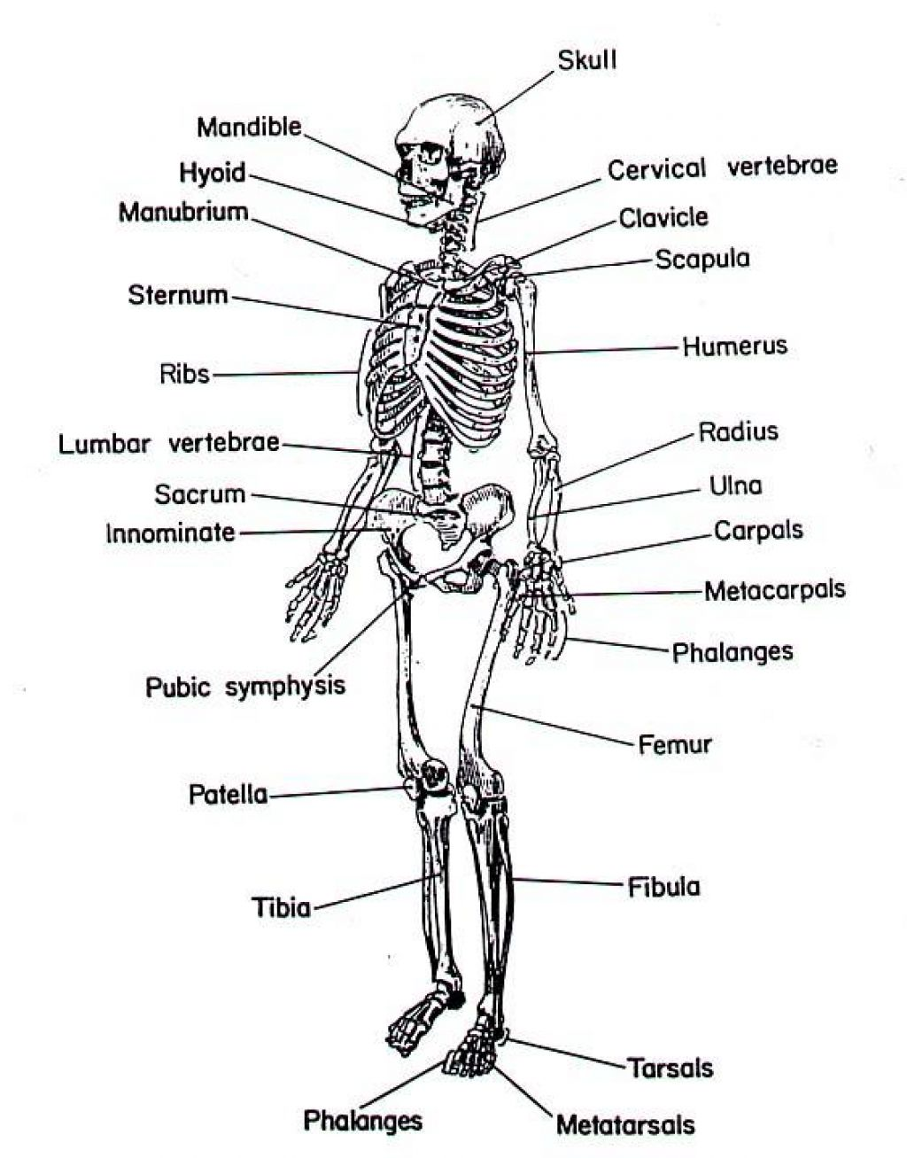 Musculoskeletal System Copy1 On Emaze