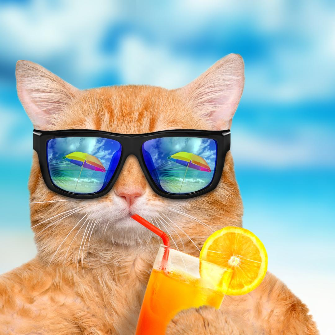 cat in sunglasses drinking cocktail