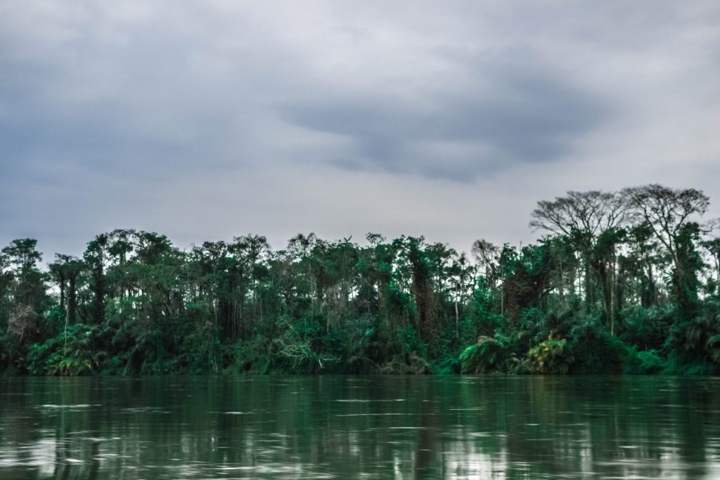 Trees on the edge of the Lefini River in the Republic of the Congo