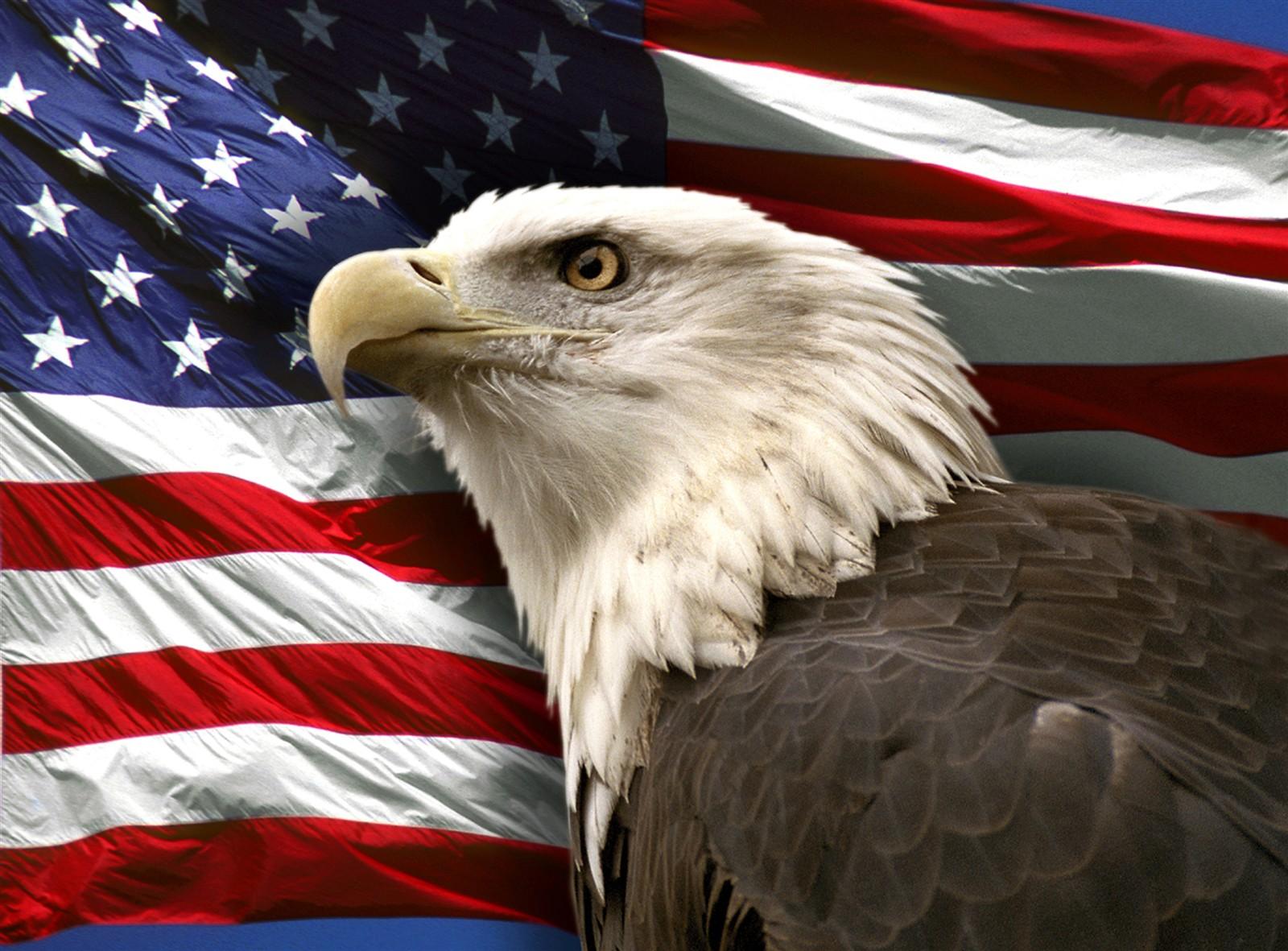 american-flag-bald-eagle-images-download