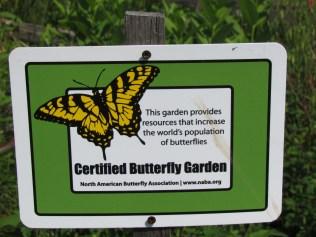 Pollinator Garden 11