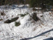 This is the bear den from farther away. Not far enough in this writer's humble opinion! Credit: USFWS