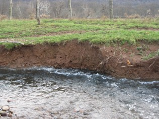 This is one of the typical vertical banks along the lower portion of Poplar Run. Large chunks continuously fell into the stream. Photo courtesy of Christine.