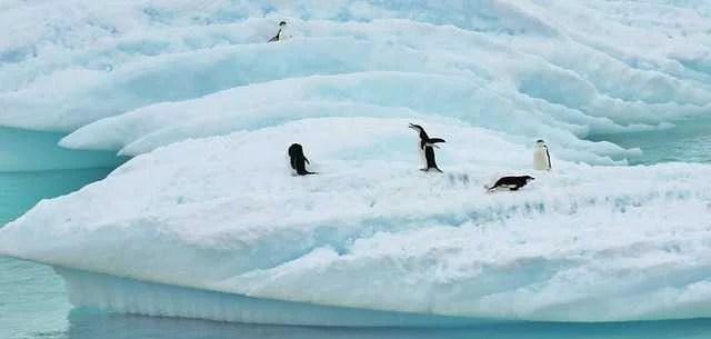 antarctica-279390_640.jpg