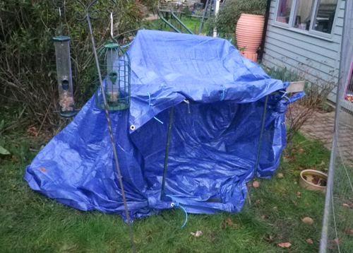 Gary's blue poodle tarp-tent