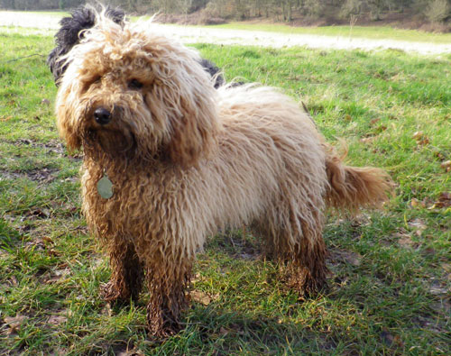 Muddy and proud