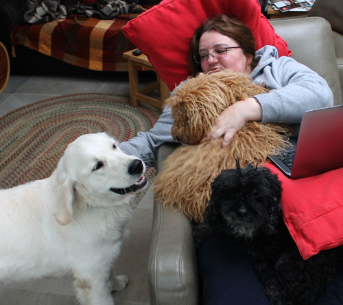 Covered in dogs