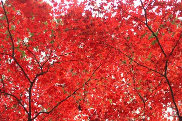 一目瞭然 秋の祭典 鎌倉の紅葉を散策マップで堪能する