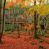 京都の紅葉は大人の遊び場 楽しみ方の工夫を大人のカップルにご紹介