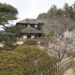 水戸偕楽園の梅の見頃と梅落としについて知りたい方に詳細を解説!
