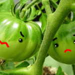台風後の野菜価格の高騰リスク対策として一番いい方法とは?
