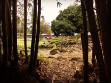 BambooRedBridgeInstagram_1383