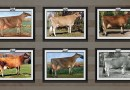 File Your Professional Cow Photos with Jersey Journal