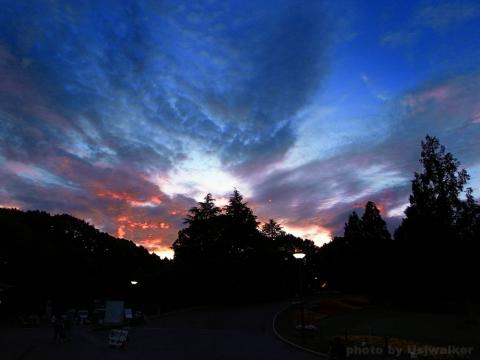 万博記念公園 蛍の夕べ