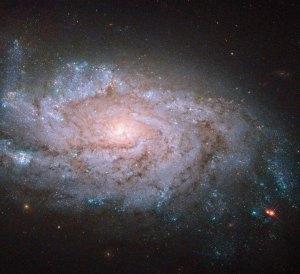 Tämä kaunis kierteisgalaksi tunnetaan koodinimellä NGC 1084. Sillä ei ole sauvamaista keskustaa, vaan se on täysi spiraali, kuten noin puolet kierteisgalakseista on. Tässä galaksissa on voitu havaita jo useita supernovia. Kuva: ESA Hubble.