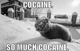 Pablo Escobar hade visst en katt också...
