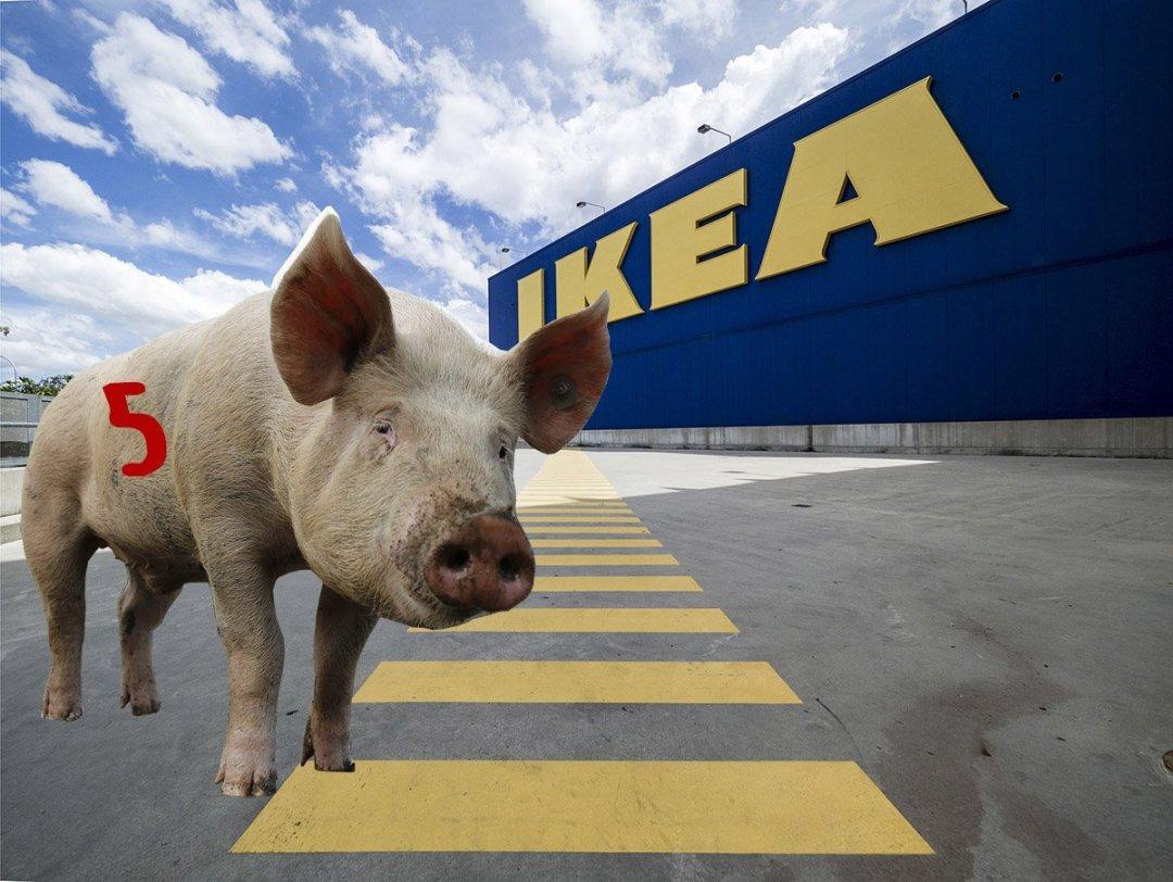 Svinkul på IKEA - så här gör du!