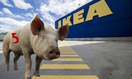 Svinkul på IKEA – så här gör du!