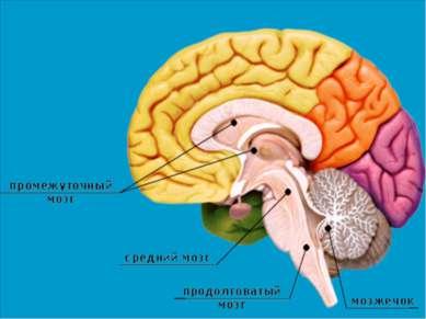departamentul de viziune a creierului)