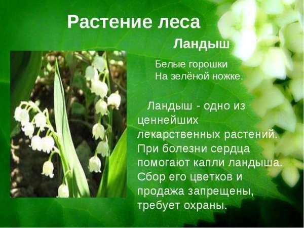 Редкие растения. Растения из Красной книги Зауралья ...
