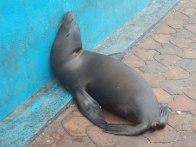 relax, Galapagos, 28 dec. 2009