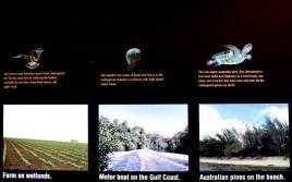 Everglades : un territoire menacé par les humains_usproject2016.com (2)
