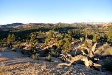 Bryce Canyon au matin