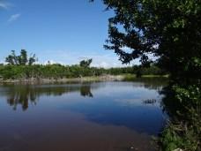 Everglades NP (29)