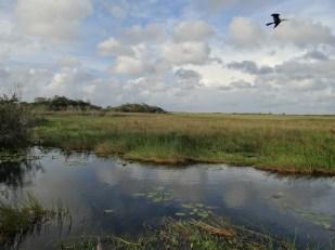 Everglades NP (37)