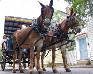 Charleston Carriage Tours image