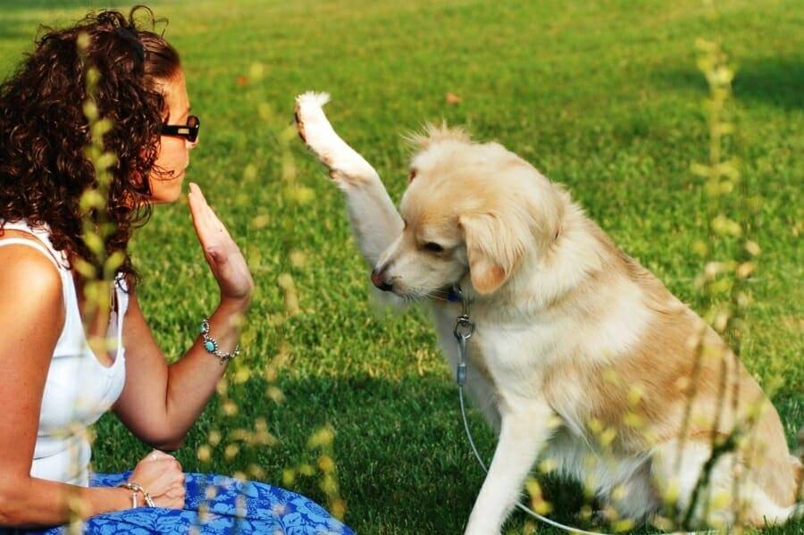 Тест: Какая собака подходит тебе по характеру?